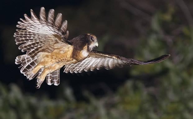 Registros fotográficos destacam a biodiversidade da região.