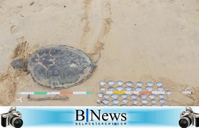 Estudos de carcaças encontradas na Praia do Mar Moreno não mostram indícios de contaminação.